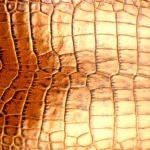 krokodilja-kozha